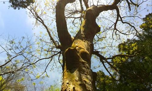きのわの「木の話」 伐採がCO2削減!? その1
