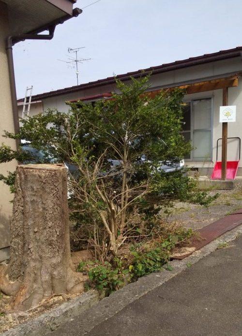 大きな木_きのわ
